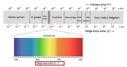 Bukalemunlar Nasıl Renk Değiştirirler?