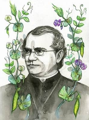 Gregor Mendel -The father of genetics.