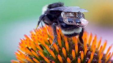 Biyonik Arılar