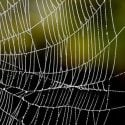 Örümcek Ağı Neden Bu Kadar Sağlam?