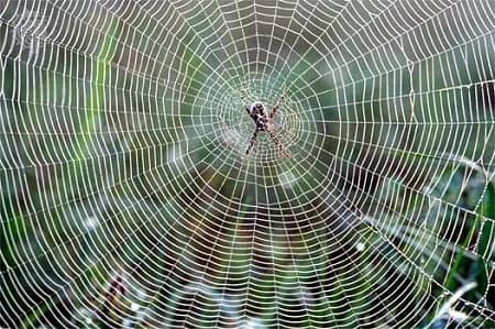 Why spider silk is so incredibly tough?