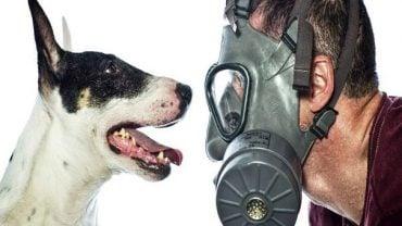 Coronavirüs ve Evcil Hayvanlar
